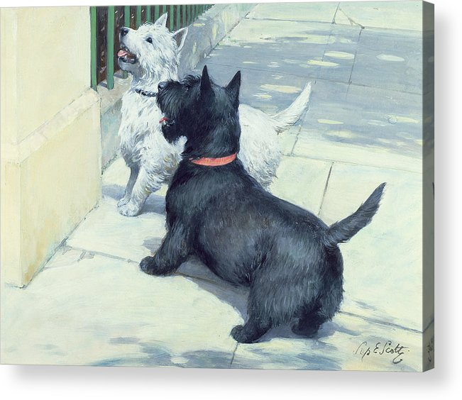 Dog Acrylic Print featuring the painting Black And White Dogs by Septimus Edwin Scott