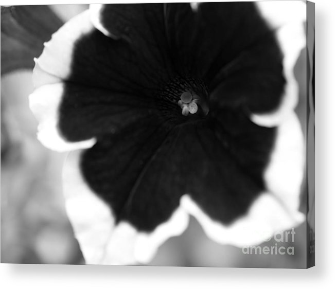 Floral Acrylic Print featuring the photograph Centered by Amanda Barcon
