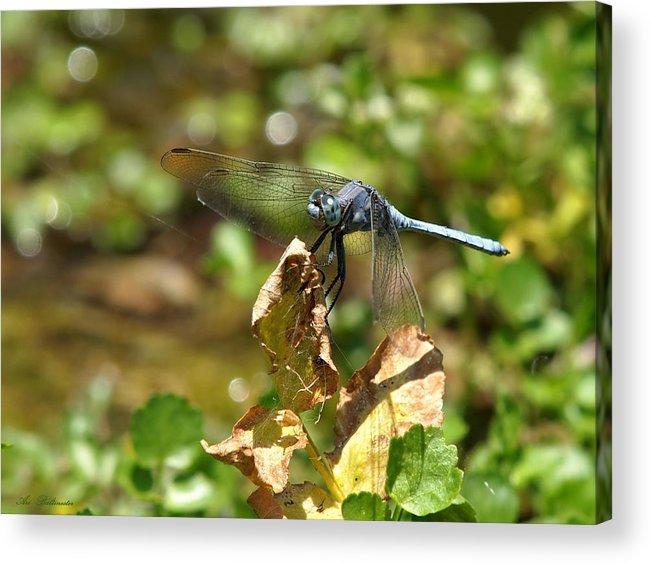 Ischnura Elegans Ebneri Acrylic Print featuring the photograph Dragonfly by Arik Baltinester
