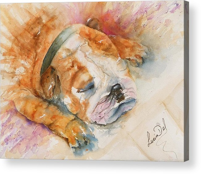 Watercolour Acrylic Print featuring the painting Enzo by Lucia Del