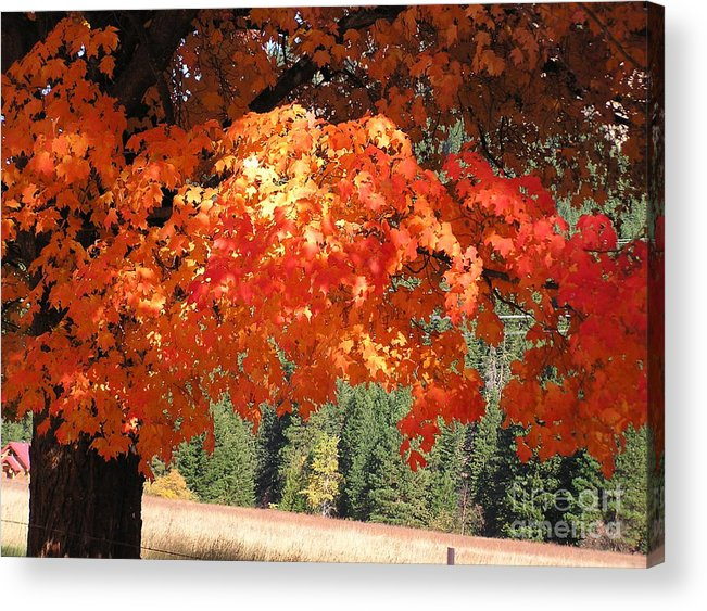 Autumn Photographs Acrylic Print featuring the photograph Flickering Sunlight by Louise Magno