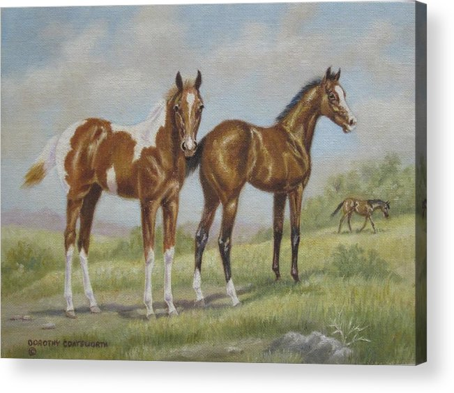 Acrylic Print featuring the painting Foals In Pasture by Dorothy Coatsworth