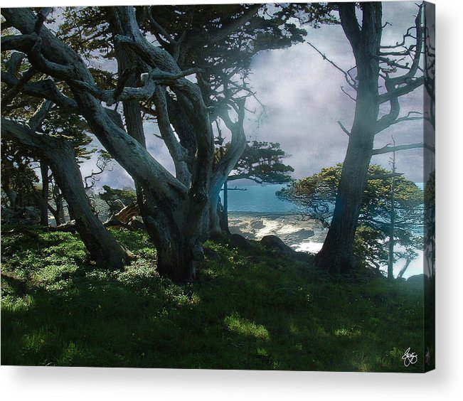 Cypress Acrylic Print featuring the photograph Fog Intrusion Point Lobos by Wayne King