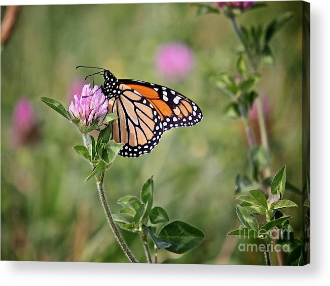 Insect Acrylic Print featuring the photograph Gold Wings by Robert Pearson