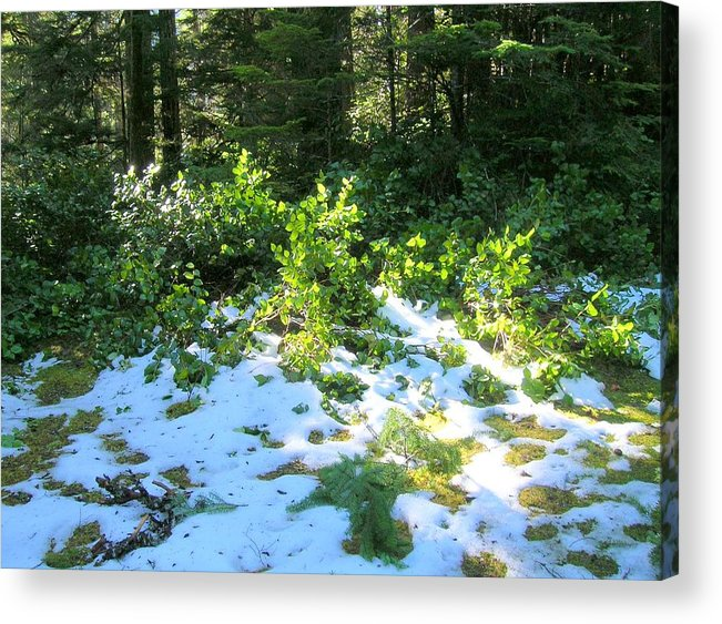 Olympic Peninsula Acrylic Print featuring the photograph Green Snow by George I Perez