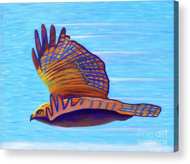 Hawk Acrylic Print featuring the painting Hawk Speed by Brian Commerford