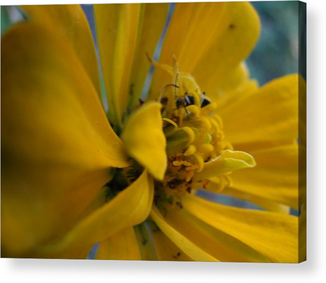 Flowers Acrylic Print featuring the photograph Hiding Place by Gloria Byler