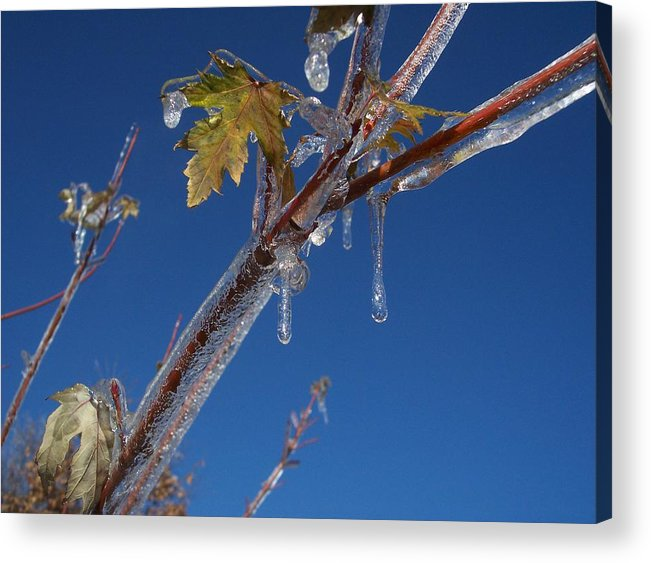 Sky Blue Ice Leaves Acrylic Print featuring the photograph In The Ice by Michael Parsons