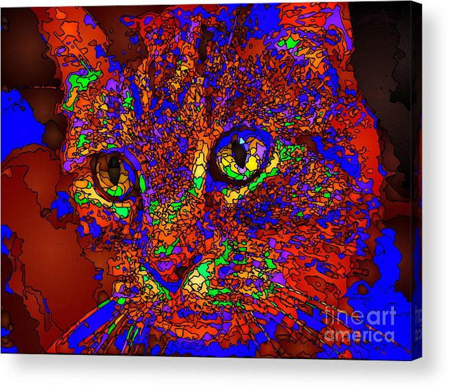 Cat Acrylic Print featuring the digital art Looking For An Owner. Pet Series by Rafael Salazar