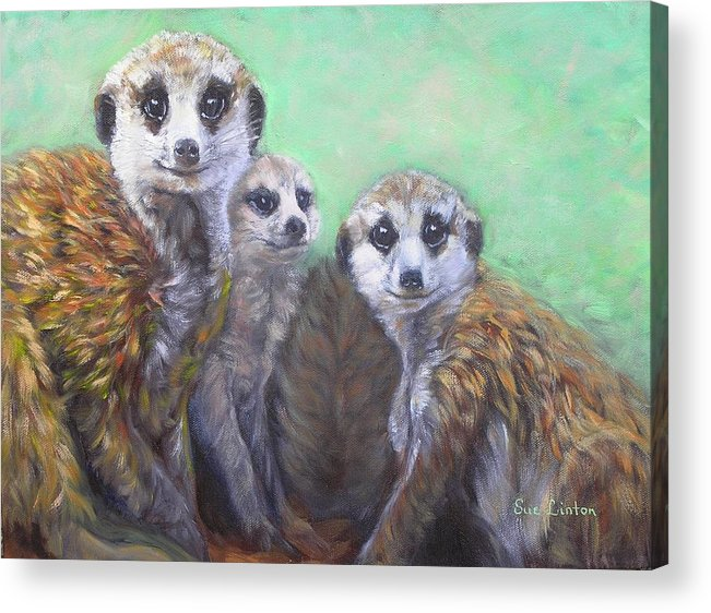 Meerkats Acrylic Print featuring the painting Meerkat Family by Sue Linton