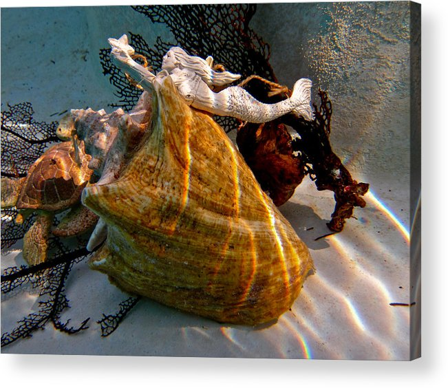 Mermaid Shells Conch Coral Turtle Water Star Gold Blue Brown Sunlight Shimmer Shadows Cool White Acrylic Print featuring the photograph Mermaid On A Shell by Barbara Kelley