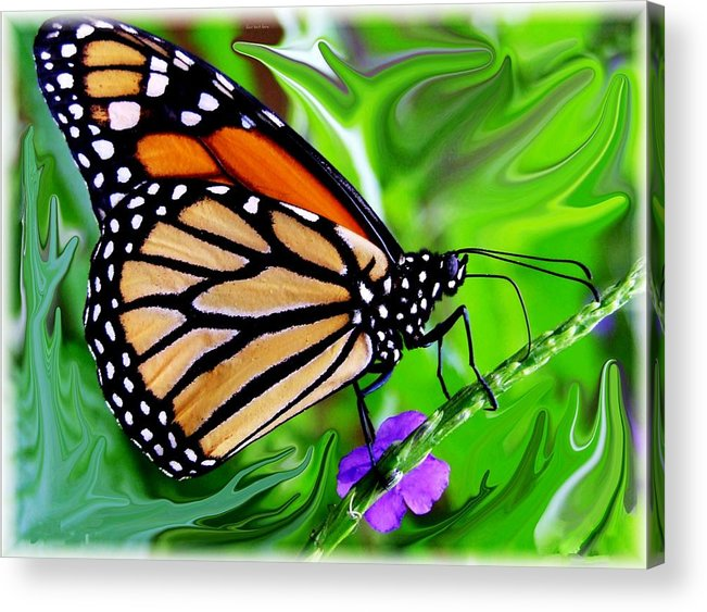Monarch Butterfly Acrylic Print featuring the photograph Monarch Swirl 1 by Jim Darnall