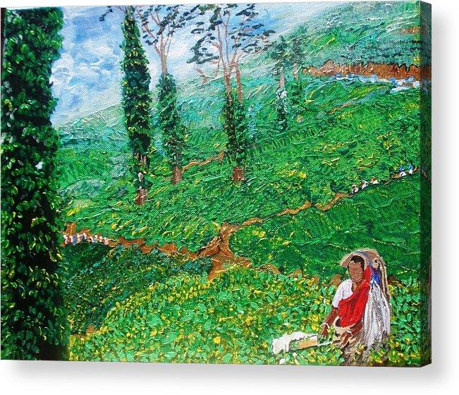 Tea Acrylic Print featuring the painting Munnar Tea Gardens by Narayan Iyer