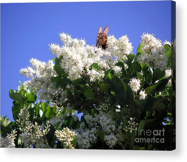 Nature Acrylic Print featuring the photograph Nature In The Wild - Bathing In Blooms by Lucyna A M Green