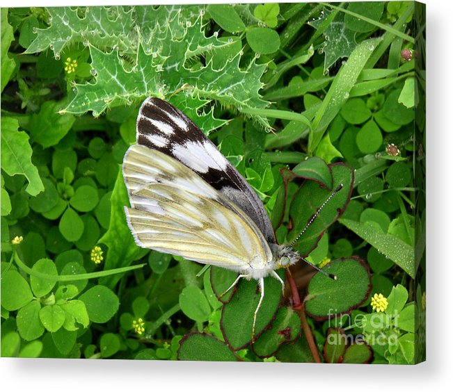Nature Acrylic Print featuring the photograph Nature In The Wild - Visiting With The Greens by Lucyna A M Green