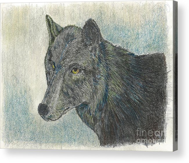 Wolf Acrylic Print featuring the drawing Northern Wolf by Judith Lindenau