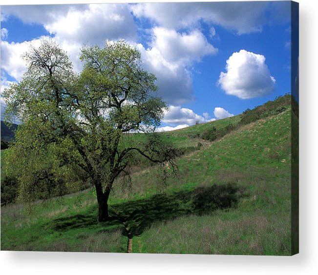 Oak Trees Acrylic Print featuring the photograph Oak Tree With Clouds by Kathy Yates