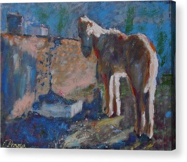 Oil Acrylic Print featuring the painting Pony by Horacio Prada