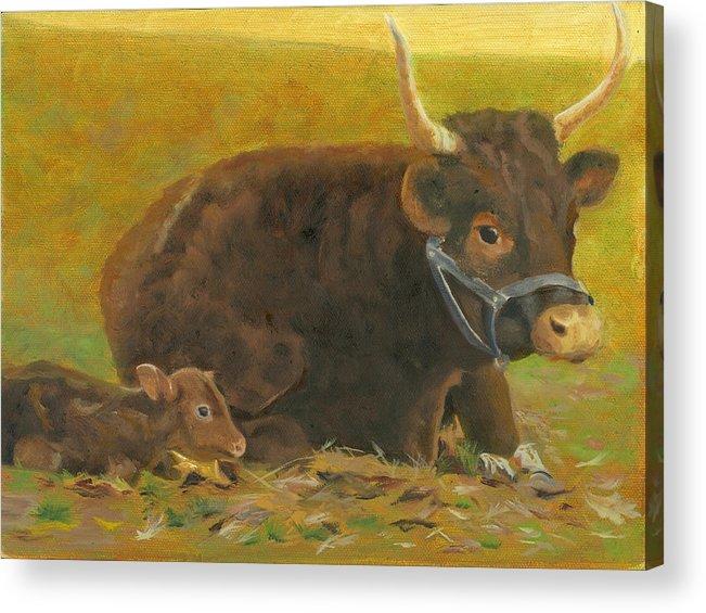 Cow Calf Bull Farmscene Acrylic Print featuring the painting Proud Pappa by Paula Emery