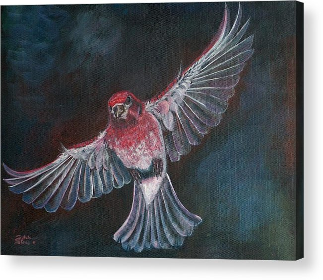 Acrylic Acrylic Print featuring the painting Redbird by Sylvia Stone