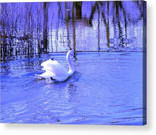 Landscape Acrylic Print featuring the photograph Reflections In Blue by Kendall Eutemey