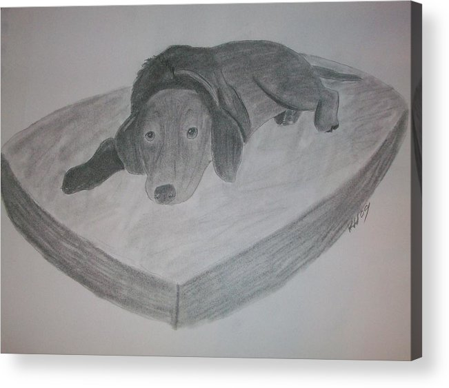 Dog Acrylic Print featuring the drawing Resting Dog by Kristen Hurley