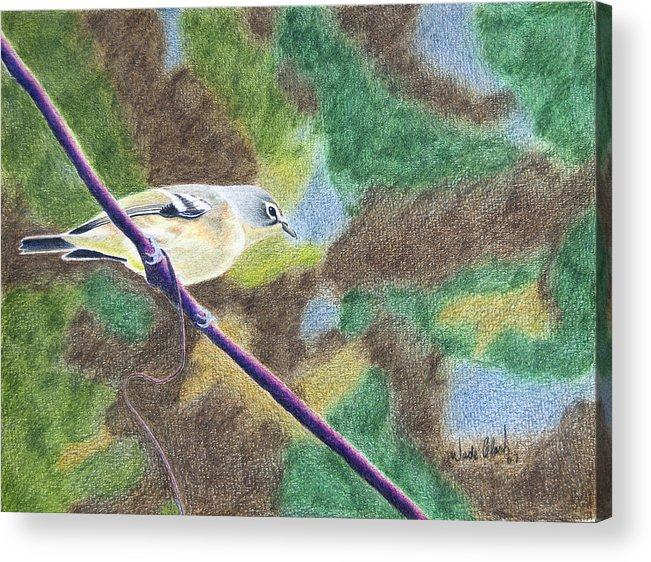 Birds Acrylic Print featuring the painting Solitary Vireo by Wade Clark