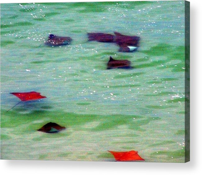 Sting Rays Acrylic Print featuring the digital art Sting Rays by Kenna Westerman