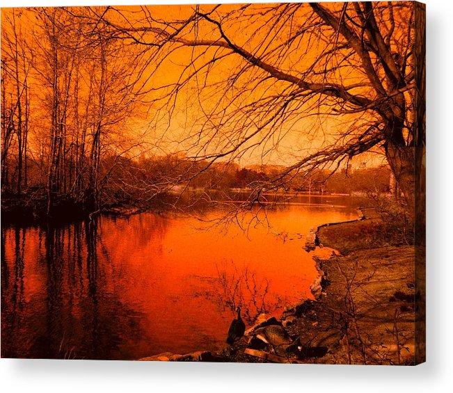 Landscape Acrylic Print featuring the photograph Studying The Sunset by Kendall Eutemey