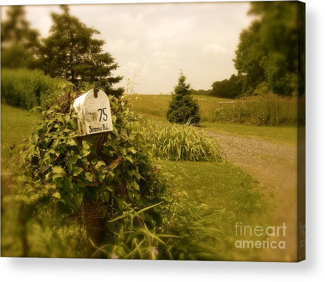 Rural Acrylic Print featuring the photograph Summer Road by Sergio Geraldes