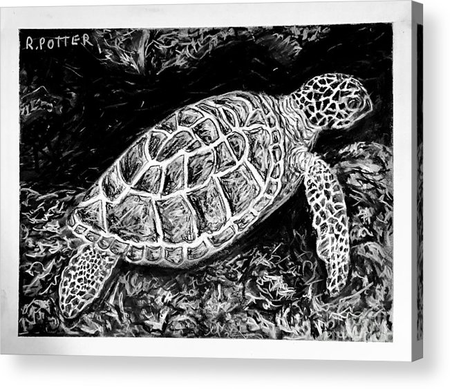Turtle Acrylic Print featuring the drawing The Turtle Searches by Robbie Potter