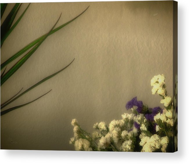 Dry Acrylic Print featuring the photograph to_010_c Us And Them by Drasko Regul