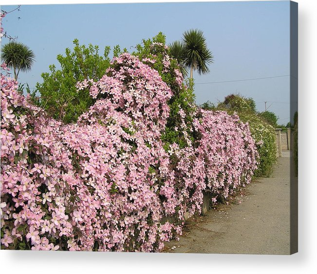 Flowers Acrylic Print featuring the photograph Wall Of Beauty In Ireland by Jeanette Oberholtzer
