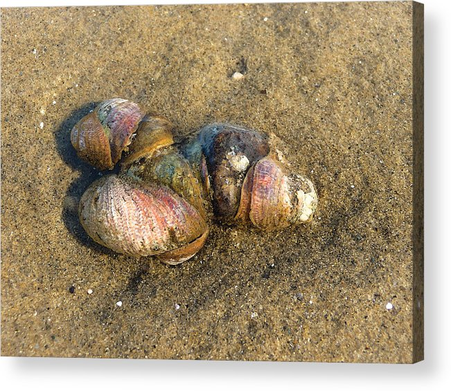 Seashells Acrylic Print featuring the photograph Watercolored Seashells by Margie Avellino