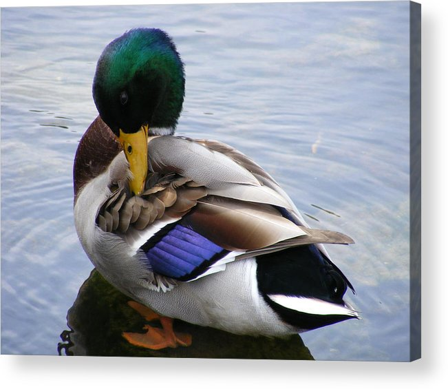 Wildlife Acrylic Print featuring the photograph Waters Edge by Doug Mills