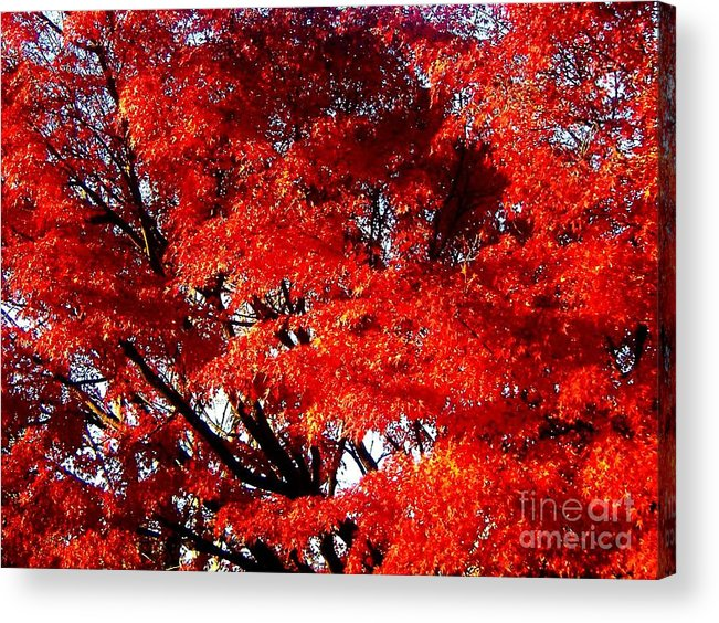 Eco Art Acrylic Print featuring the photograph Whispers Of A Japanese Maple by Juliette Carter-MarShall