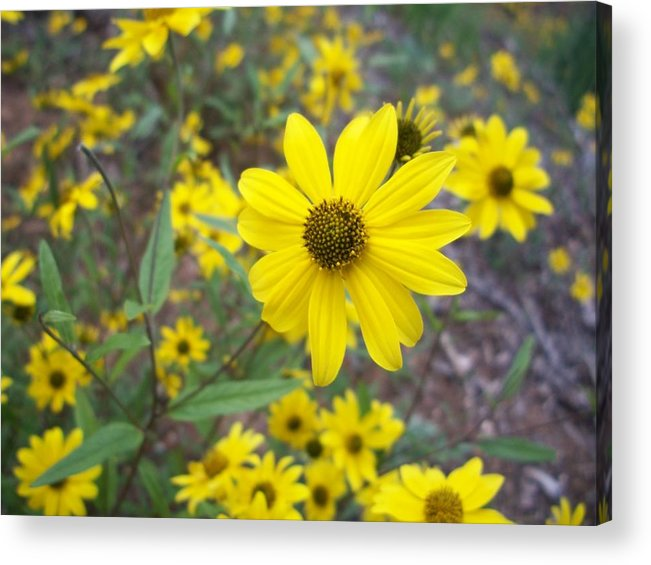 Yellow Flower Acrylic Print featuring the photograph Yellow Flower by Trenton Heckman