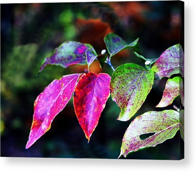 Fall Acrylic Print featuring the photograph Fall In Shades Of Purple by Kenna Westerman