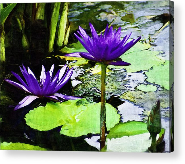 Flower Acrylic Print featuring the photograph Purple Water Lilies by D W Steinbarger