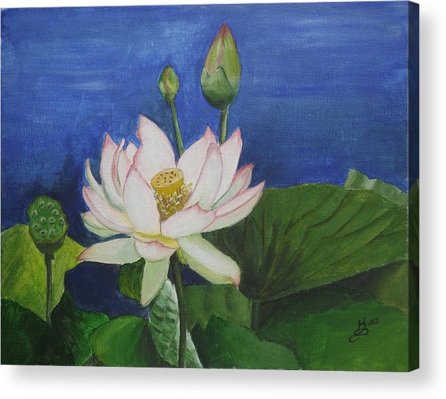 Lotus Flower Acrylic Print By Kim Selig