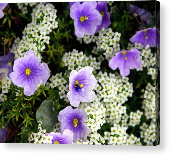Flowers Acrylic Print featuring the photograph Flowers Etc by Marty Koch