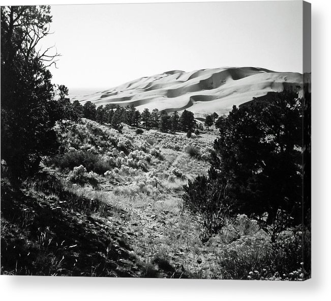 Landscape Acrylic Print featuring the photograph Path To The Dunes by Allan McConnell
