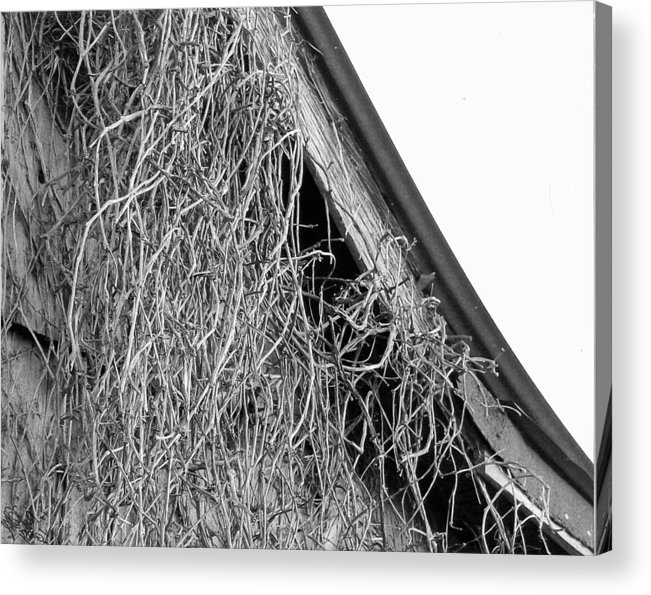 Photography Acrylic Print featuring the photograph Withered by Glenda Quinlin-Jacobs