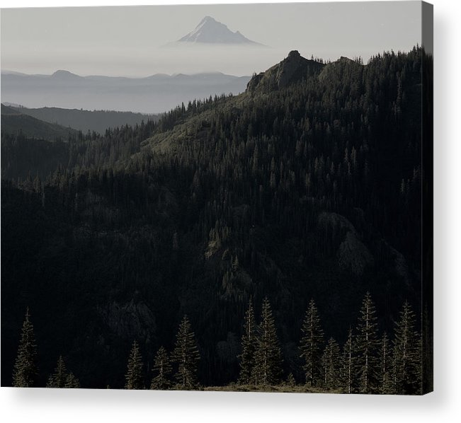 Nature Acrylic Print featuring the photograph Silverstar Trees by Benjamin Garvey