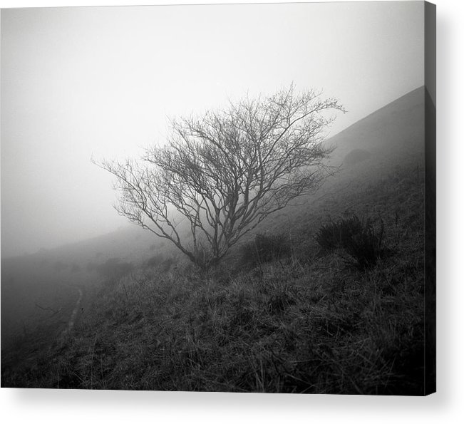 Nature Acrylic Print featuring the photograph Tree Mist by Benjamin Garvey