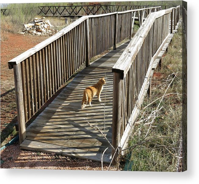 Cat Acrylic Print featuring the photograph Cat Walk by Mike Witte