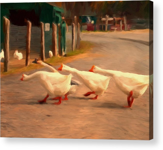 Geese Acrylic Print featuring the painting Goose Crossing by Michael Pickett