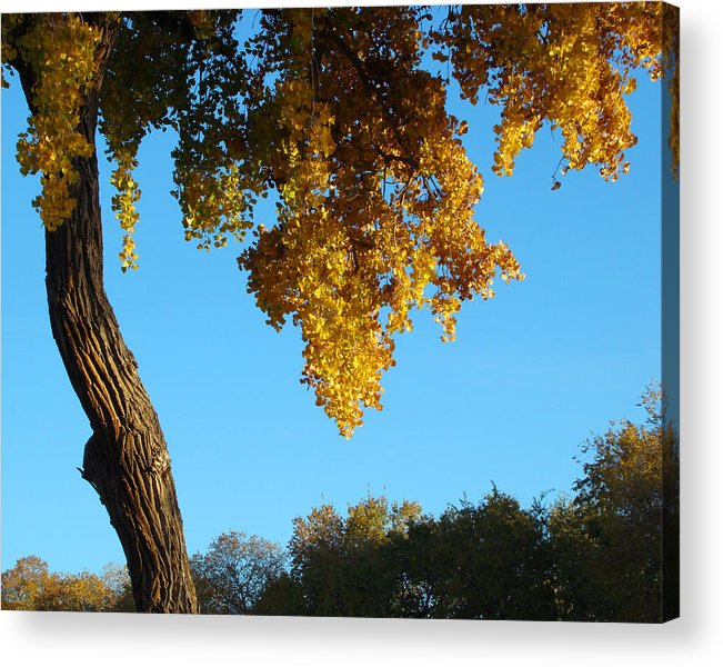 Autumn Acrylic Print featuring the photograph Autumn Shadows_rio Grande Blvd_albuquerque_nm by Jon William Lopez