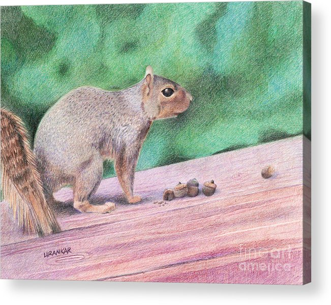 Squirrel Acrylic Print featuring the drawing Feelin' Alittle Squirrely by Lisa Urankar