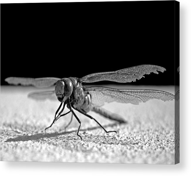 Dragon Fly Acrylic Print featuring the photograph Broken Wing. by Jorge Gaete
